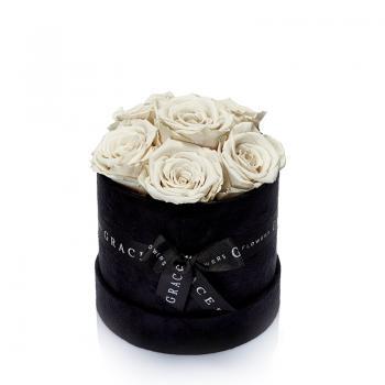 Grace Siyah Kadife Kutuda 6'lı Solmayan Beyaz Gül